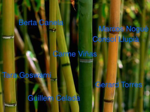 Noves espècies a Nauestruch