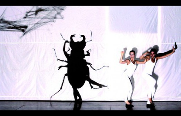 Insectum – David Pradas, Slidemedia i Bots