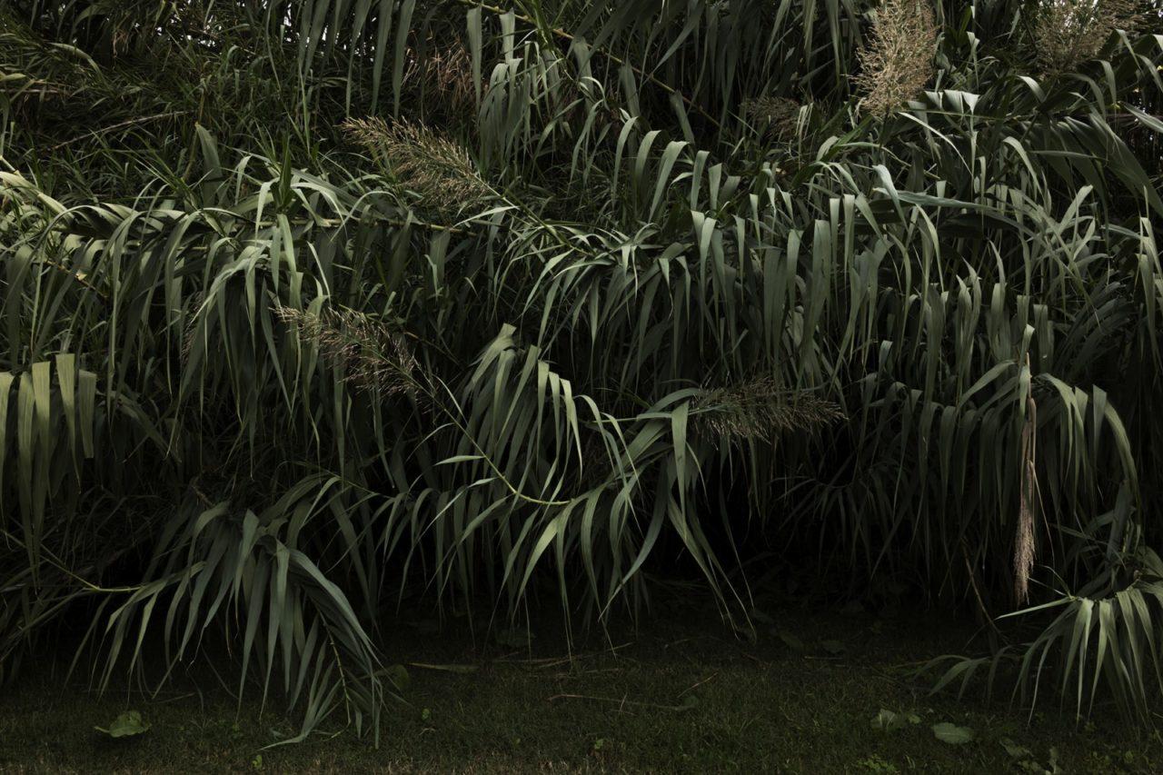 Besòs: A Noble Ecosystem