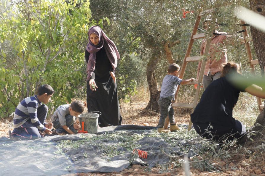 Palestina. Ocupació, terra, resistència.
