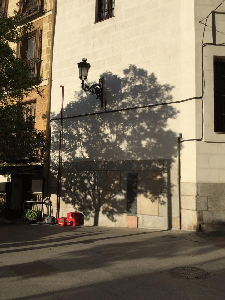 To talk about trees: una exposició de Sara Agudo Millán – Art Nou
