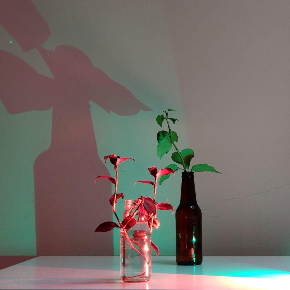 Plants & light